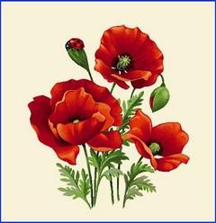 Декоративна калъфка Червени макове