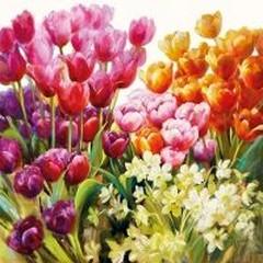Салфетки Ambiente Tulips